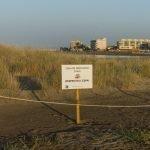 Read more about the article Dimarts 9 de juliol comencen els treballs de neteja de la zona dunar