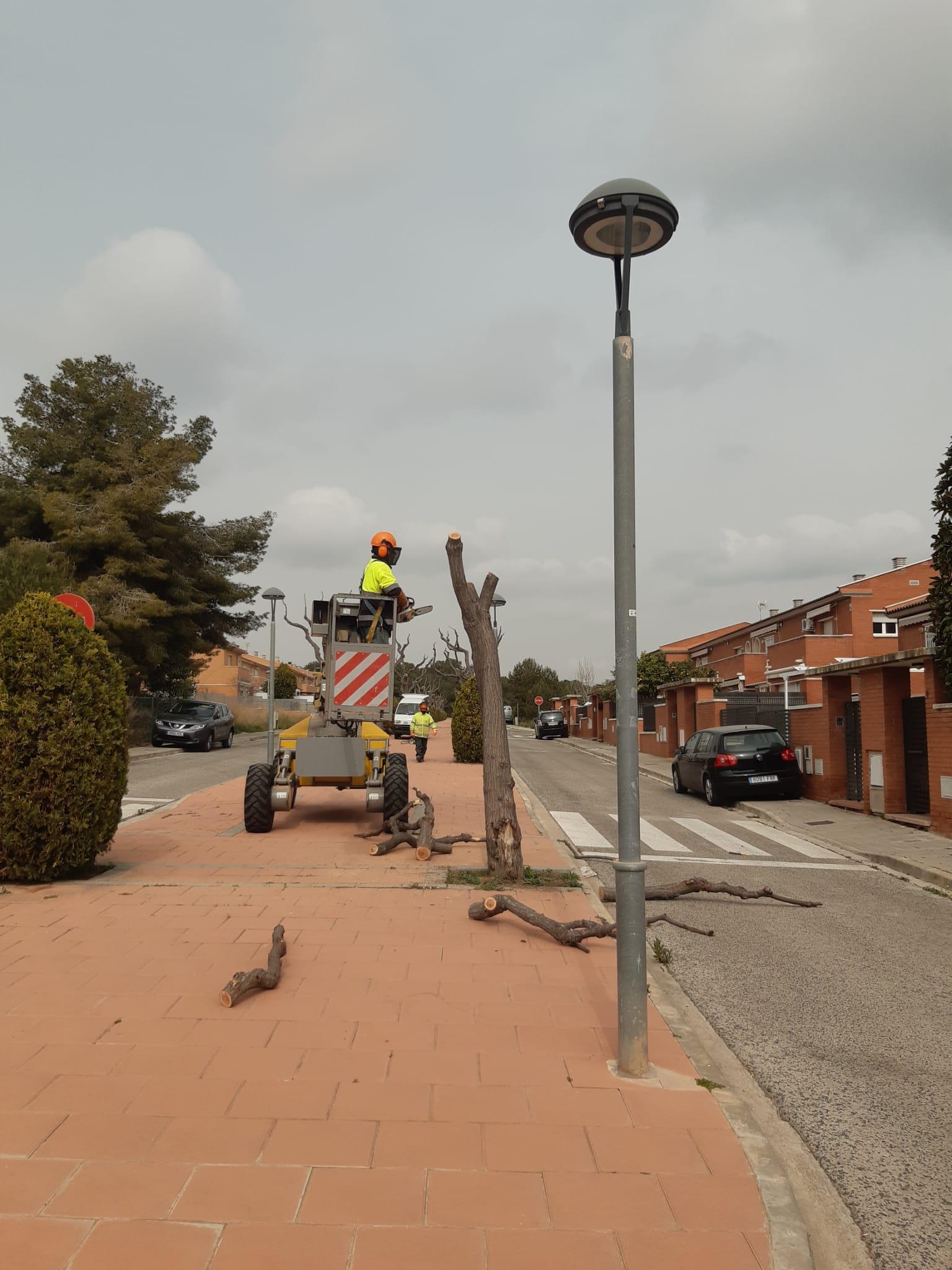 Read more about the article Es retira arbrat viari que provoca l'aixecament de les voreres