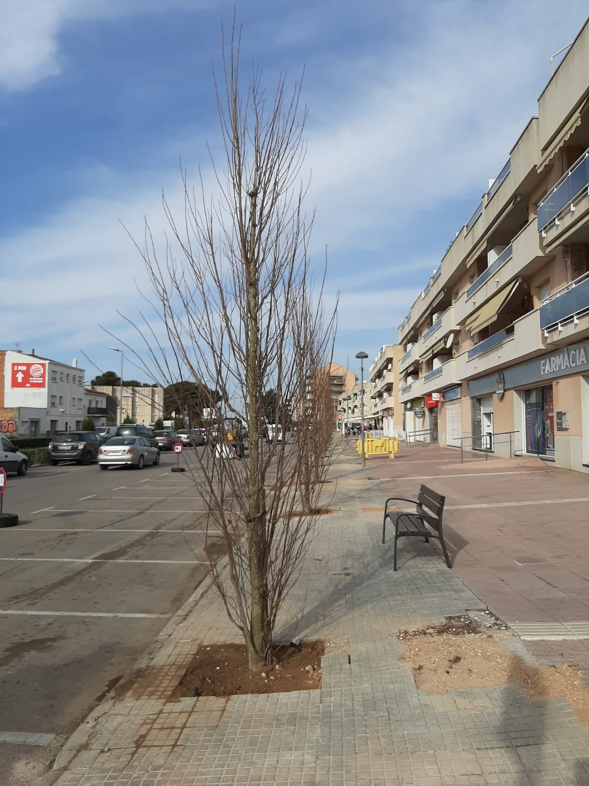 Comencen a plantar-se els arbres a l'Av Barcelona i a la Crta de Cunit a Clariana